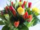 tulipan.jpg?gframe= 1&shv= 1